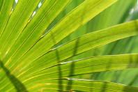 palmpasen