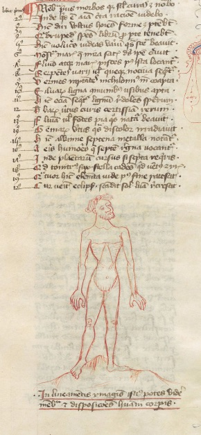 Tekening aan het begin van een boek over anatomie van Thomas van Cantimpré, Engeland, circa 1400-1410.