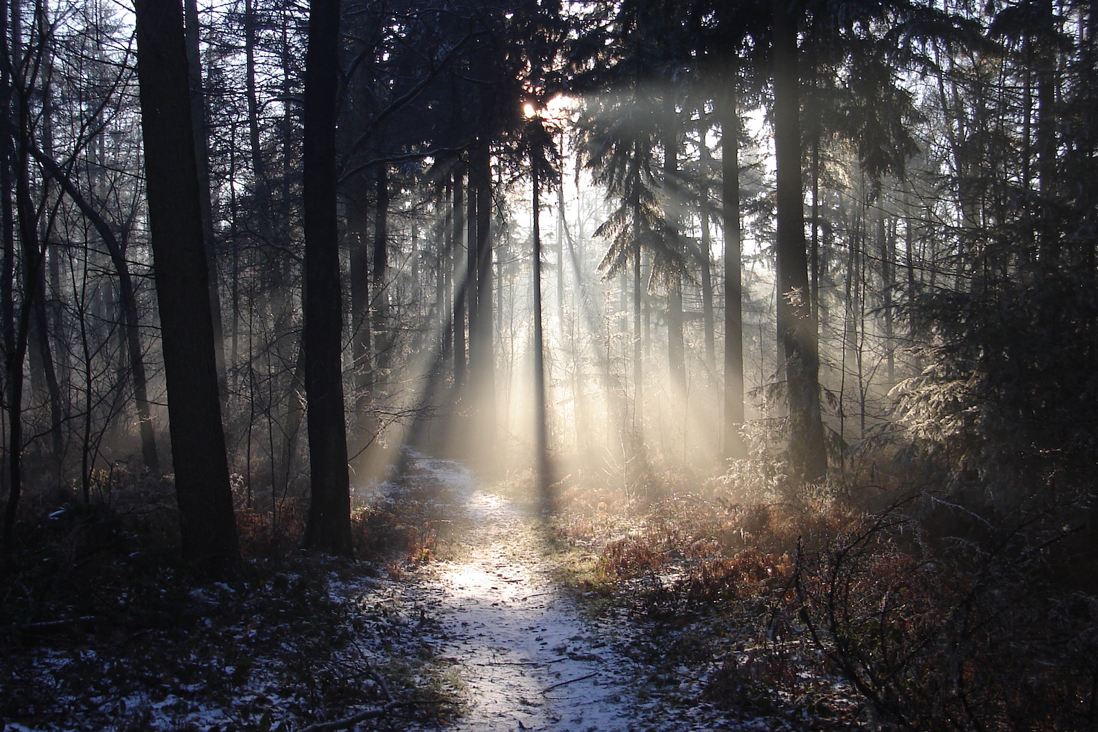 bos winterlicht